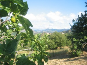 Farm in Calabria, Italy